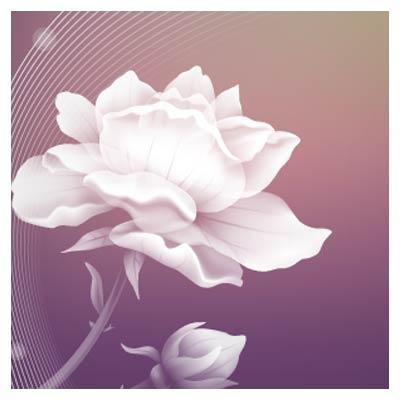 دانلود وکتور مجموعه گل های رز سفید