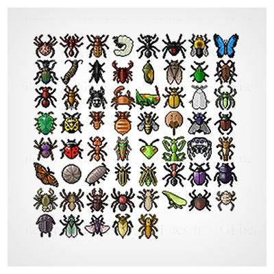 کلکسیون حشرات