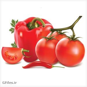 دانلود وکتور گوجه فرنگی های قرمز