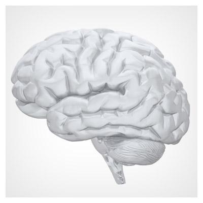 عکس سه بعدی مغز سر انسان