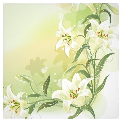 lilium flower vector