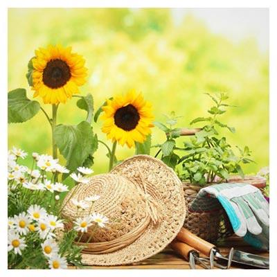 گل و باغبانی