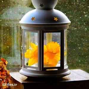 دانلود فایل تصویری فانوس و گل زرد با فرمت JPG