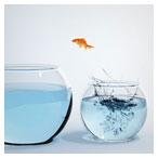 عکس با کیفیت تنگ ماهی