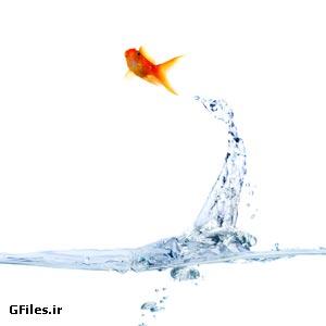 دانلود عکس با کیفیت پرش ماهی از آب ، با پسوند jpg