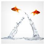 ماهی های بازیگوش