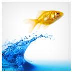 ماهی قرمز و آب