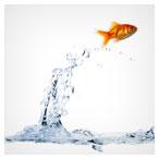 رهایی ماهی