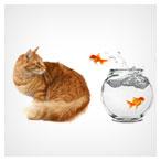 عکس با کیفیت گربه و ماهی