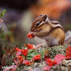 دانلود عکس با کیفیت سنجاب کوچولو در طبیعت