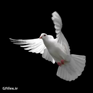 دانلود رایگان عکس با کیفیت کبوتر در حال پرواز