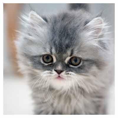 گربه با مزه