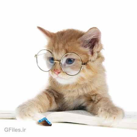 تصویر با کیفیت خلاقانه از گربه درسخوان با عینک بر چشم