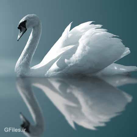 دانلود رایگان عکس با کیفیت قوی سفید در آب ، با پسوند jpg
