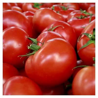 ویدیوی کوتاه از گوجه های سبزی فروشی