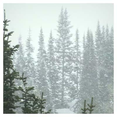 کلیپ کوتاه زمستان جنگل