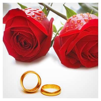 عکس با کیفیت گلهای رز و حلقه ازدواج