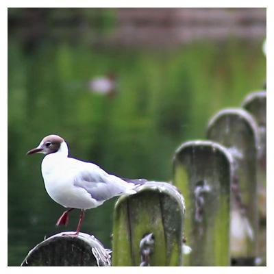 دانلود ویدئوی پرندگان در پارک