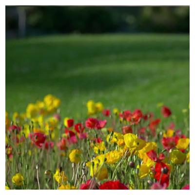 دانلود ویدئوی کوتاه باغ گلها