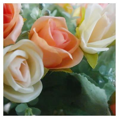 ویدئوی با کیفیت نمای نزدیک گلهای رز