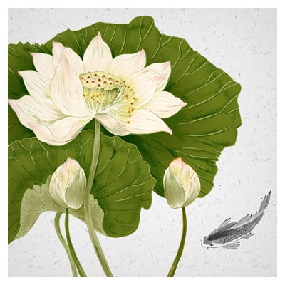 دانلود گل لایه باز مرداب ، با پسوند PSD و لایه باز