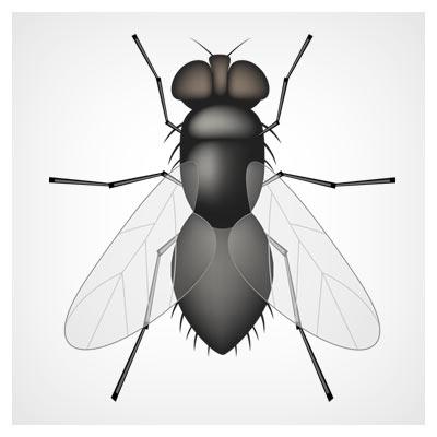 دانلود وکتور مگس (پشه) fly vector