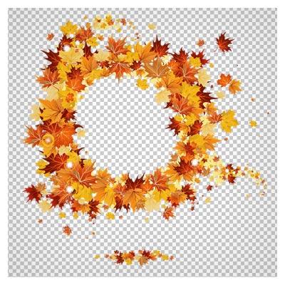 فایل دوربری شده مجموعه برگهای زرد پاییزی (بدون پس زمینه)