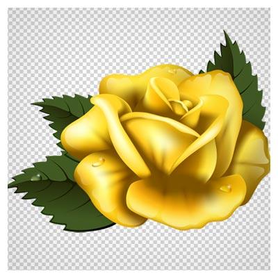گل رز زرد رنگ با فرمت png (ترانسپرنت بدون پس زمینه)(Yellow Rose Clipart PNG Image)