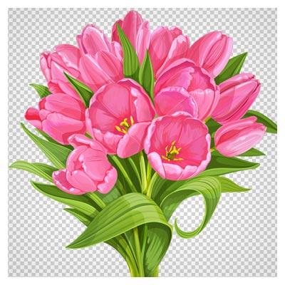 تصویر png (ترانسپرنت) و کارتونی دسته گلهای لاله صورتی (Pink tulip flowers)
