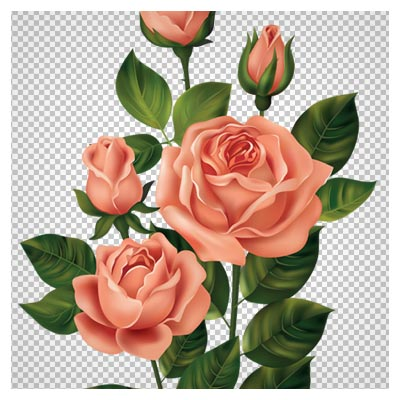 فایل دوربری شده دسته گلهای زیبای رز