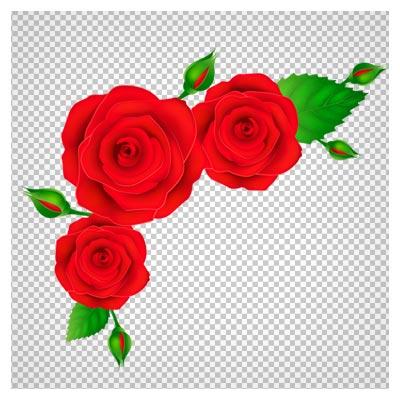 فایل بدون پس زمینه (PNG) گلهای رز گوشه ای (Corner Rose)