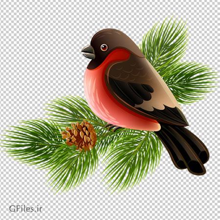 فایل دوربری شده و بدون زمینه پرنده روی درخت کاج