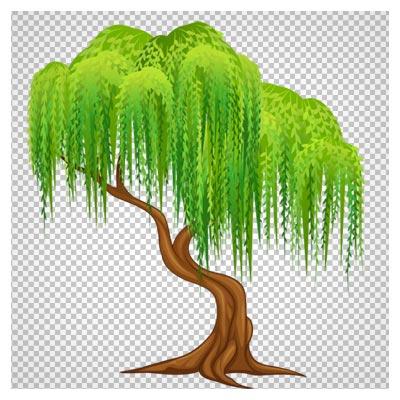 درخت کارتونی بید مجنون بصورت دوربری شده و بدون پس زمینه