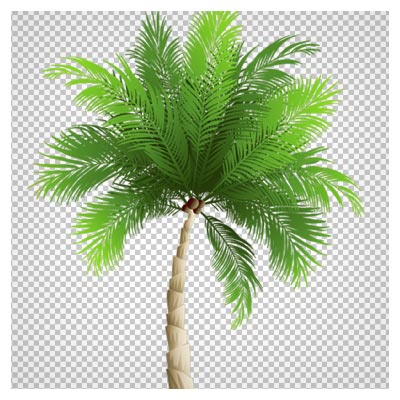 دانلود فایل png بدون زمینه درخت نارگیل (نخل و درخت ساحلی)
