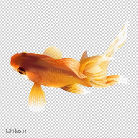 فایل دوربری شده ماهی قرمز (بدون پس زمینه)