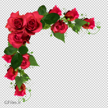 فایل png گل های رز قرمز حاشیه ای