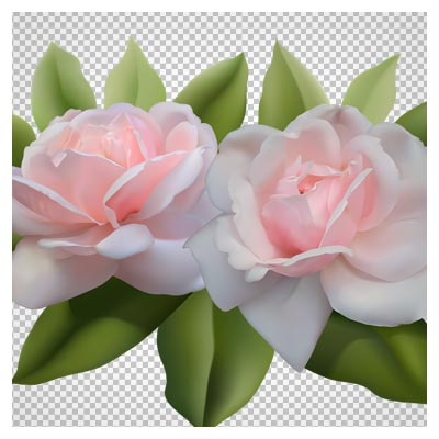 فایل png  گل های رز صورتی (بدون پس زمینه و دوربری شده)