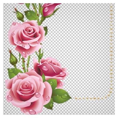 فایل png قاب و حاشیه گل های رز صورتی زیبا