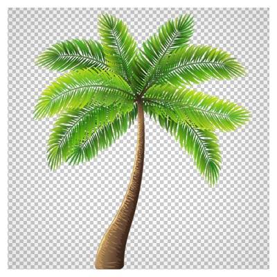 فایل png درخت نارگیل (درخت نخل)
