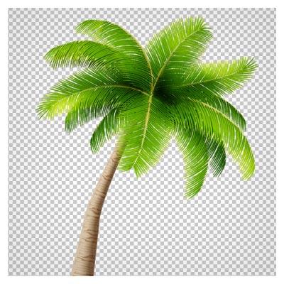 png درخت نخل و نارگیل (ترانسپرنت)