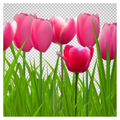 فایل png دشت گل های لاله قرمز