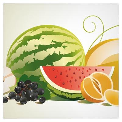وکتور مجموعه میوه ها (هندوانه ، خربزه ، انگور و ...)