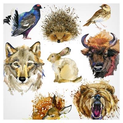 تصاویر نقاشی شده حیوانات مختلف با آبرنگ