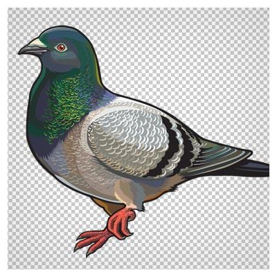 فایل PNG بدون پس زمینه کبوتر با کیفیت بالا