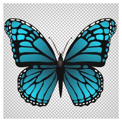 فایل بدون زمینه پروانه آبی با کیفیت بالا