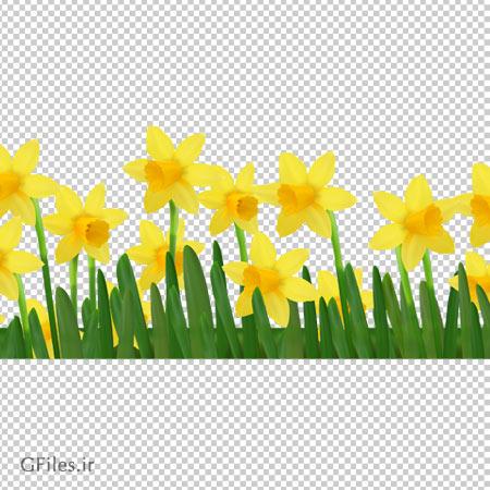 فایل بدون زمینه گلهای نرگس زرد با کیفیت بالا