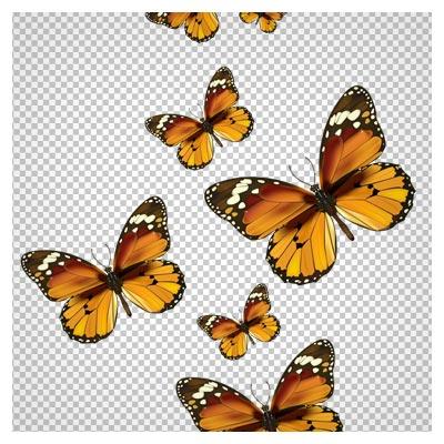 فایل دوربری شده مجموعه پروانه با کیفیت