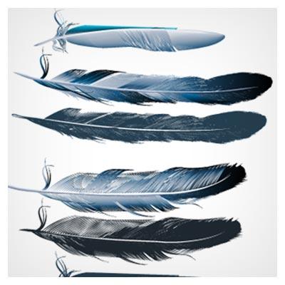 وکتور مجموعه پر پرندگان بصورت لایه باز (Realistic Feathers Vector Design Set)