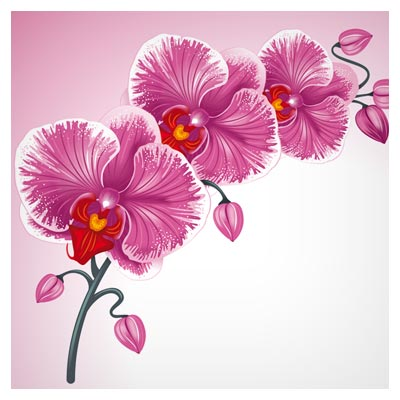 دانلود وکتور لایه باز گل های زیبای ارکیده صورتی (Orchid Flower)