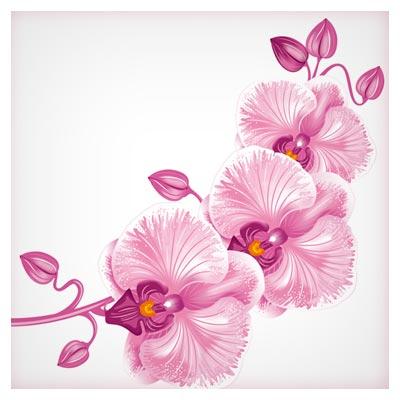دانلود رایگان وکتور گل های صورتی ارکیده (Orchid Flower)